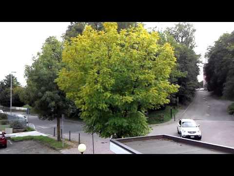 Asus Zenfone 6: Test video Full HD 1080p 30fps