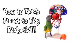 How to Teach Parrot to Play Basketball