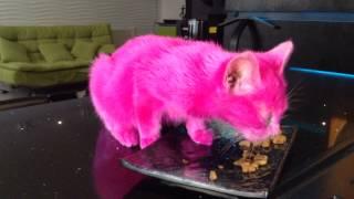 Розовая кошечка Нана на кухне Бари Алибасова