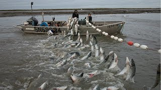 Amazing Net Fishing - Most Satisfying Big Catch Fishing At Sea With Beautiful Natural