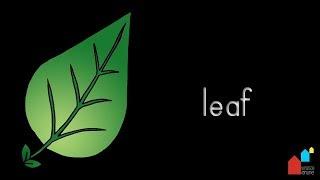 Parts of the leaf - Montessori Botany Presentation