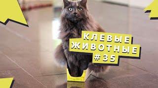 Веселые зверюшки #35 Funny pets