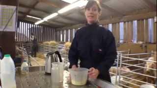 How to Tube Feed A Newborn Lamb
