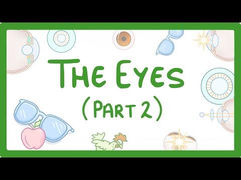 Dezvoltarea organului uman al vederii
