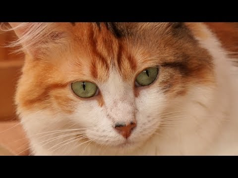 """Café com gatos? Conheça o primeiro """"cat café"""" do Brasil, em Teresópolis"""