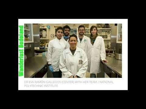 Hpv cin 2 treatment