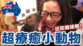 超療癒! 澳洲特有動物超近距離體驗! 被萌到不要不要的 ♥ 滴妹