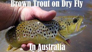 Fly fishing for trout in Australia with Robbie Alexander