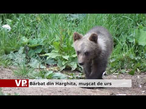 Bărbat din Harghita, muşcat de urs