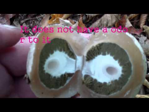 Kuko halamang-singaw sa mga batang wala pang isang taon