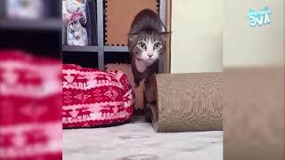 Приколы с котами   ТОПовая подборка!