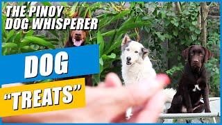 What Kind Of DOG TREATS Do I Use?