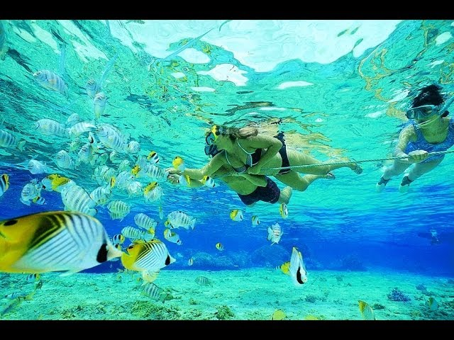 Snorkeling in Paradise Island, Bahamas