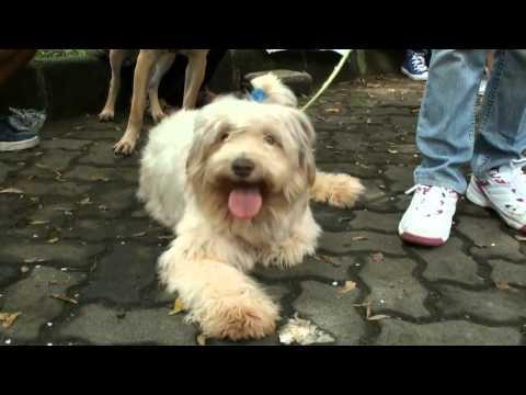 Video NET5 - Adopsi anjing dan kucing gratis