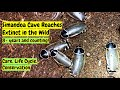 Simandoa conserfariam Cave Roach Extinct Cockroach #simandoaconserfariam #simandoacaveroach