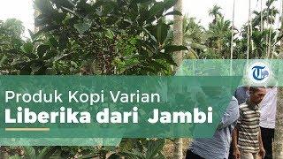 Kopi Liberika Tunggal Komposit, Produk Kopi Varian Liberika dari Tanjung Jabung Barat Jambi