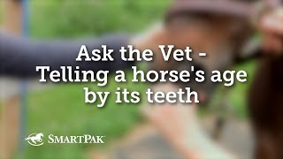 Ask the Vet - Telling a horse's age by its teeth