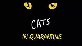 Cats in Quarantine