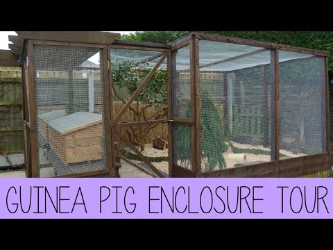 Guinea Pig Enclosure Tour | February 2015