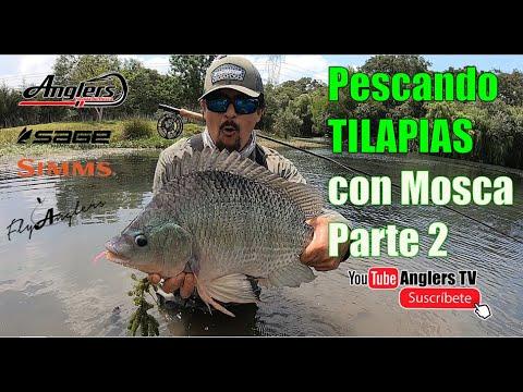 Pesca de Tilapia con Mosca, ahora nos tocó a nosotros / Tilapia ON The Fly 2