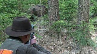 Best Shots of Wild Boar Hunting,Wildsau Jagd,Chasse Au Sanglier
