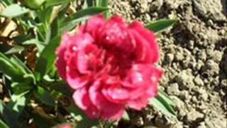 Les Jardins Ange