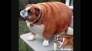 Really Fat Cats And Really Fat Dogs