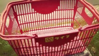 """西中島きなこ """"調和と恵み"""" (Official Music Video)"""