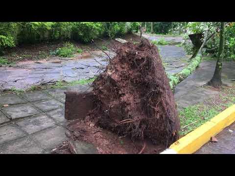 Alguns estragos do temporal em Santa Maria