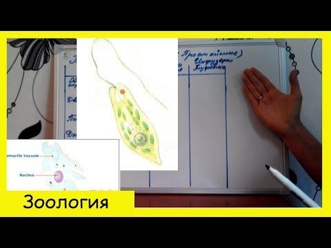 Анализ крови на лямблии натощак