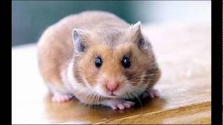 Cute Hamster Pics