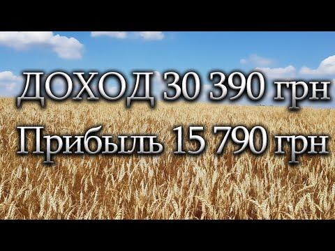 Рентабельность выращивания озимой пшеницы начинающим фермером на собственной земле.