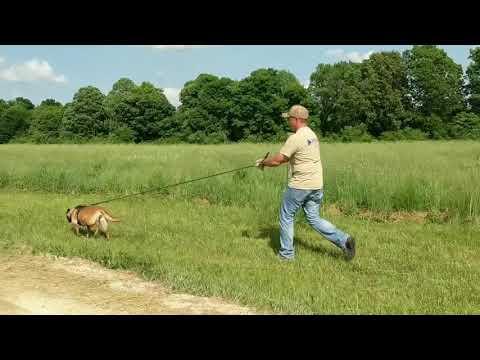 Pipeline Leak Detection Dogs