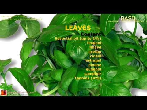 Video Basil benefits. Uses and medicinal properties of Basil plant, leaves