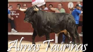 preview picture of video 'Capea Torres de la Alameda 8-10-2012.'