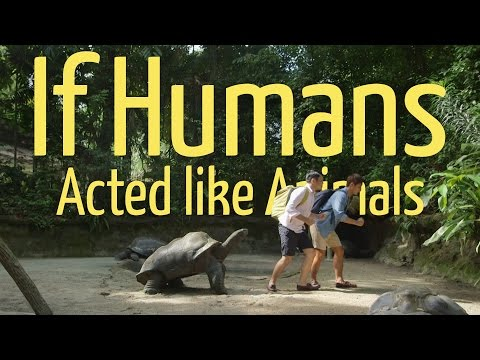 If Humans Acted Like Animals (Ft. Eugena Bey)