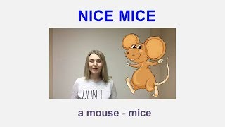 nice mice/ short poem for kids in English