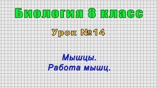 Биология 8 класс (Урок№14 - Мышцы. Работа мышц.)