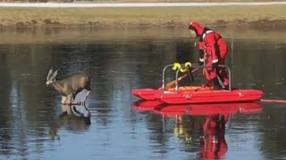 Firefighters Help Deer Stuck on Frozen Pond Get Back to Land