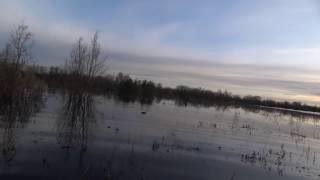 Охота на гуся и утку 2016.
