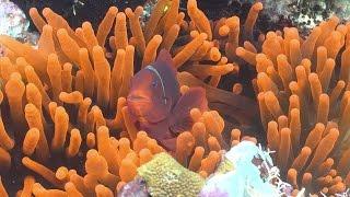 Exploring Ecosystems: Coral Reef Symbiosis   California Academy Of Sciences