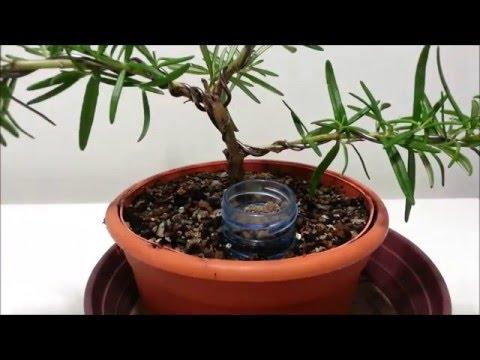 Dosificador abono bonsái -DIY-