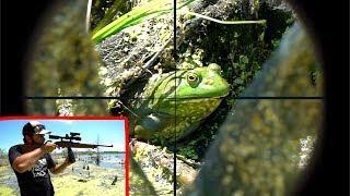 Epic SCOPE CAM Bullfrog Hunting!!! (Catch Clean Cook)