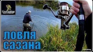 Ловля сазана на река