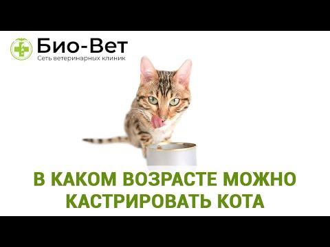 В каком возрасте можно кастрировать кота. Ветеринарная клиника Био-Вет.
