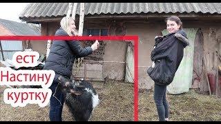 VLOG Мы в селе с Настей и Катей. Фотосессия с козлятами.