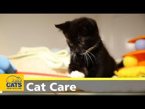 Kitten care part one: preparation