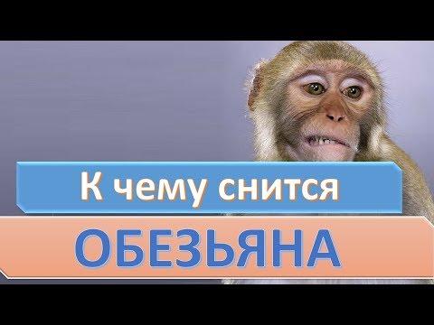 К чему снится обезьяна | СОННИК