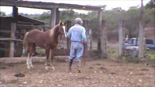 preview picture of video 'La Doma de El Franco 1.m4v'