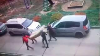 В Чебоксарах кража матраса и ковра со двора попала на видео